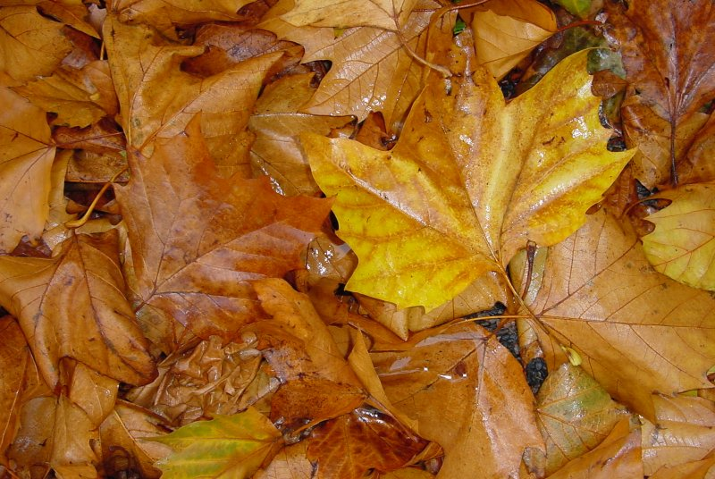 Photos de feuilles 5